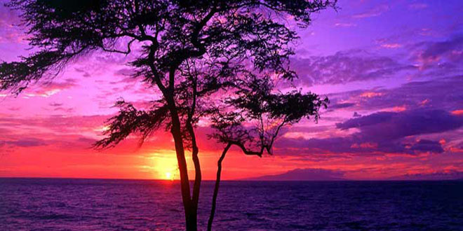 Purple-Sunset