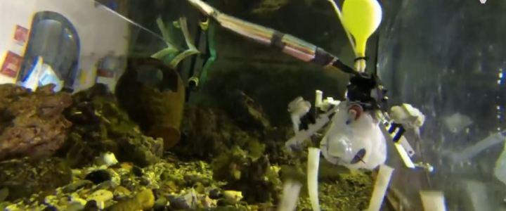 Octopus robot – o polvo robô