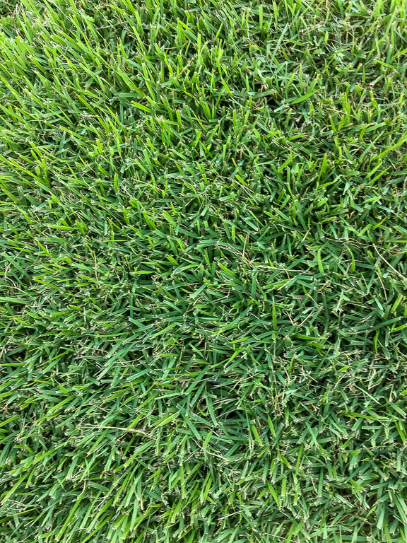 Lawn Fertilization - San Antonio Lawn Mowing - EL TORO ZOYSIA