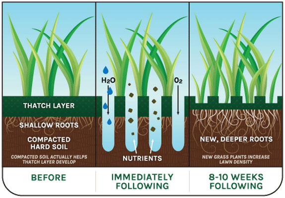 Benefits of Lawn Aeration