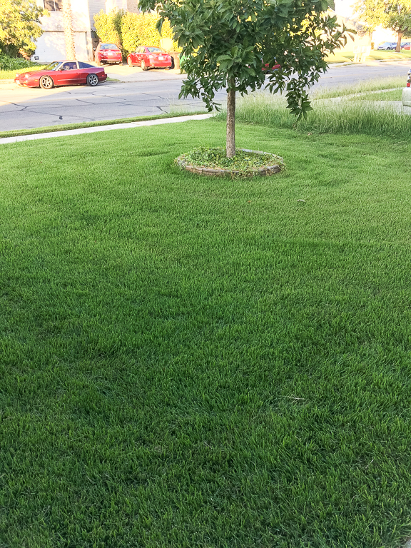 San Antonio Lawn Mowing Spring Time Green Lawn
