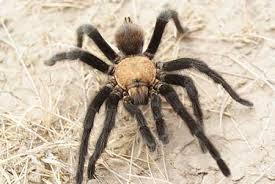 Scienziato in una notte, storie di ragni e di uomini, al museo di Calimera