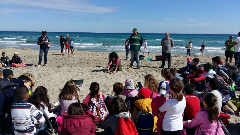 Tartarughe caretta caretta liberate in mare aperto a Otranto