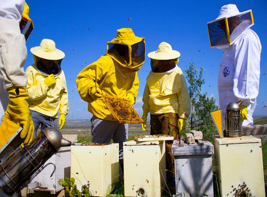 Corso di apicoltura a Borgagne