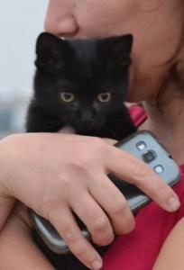 piccolo micio nero