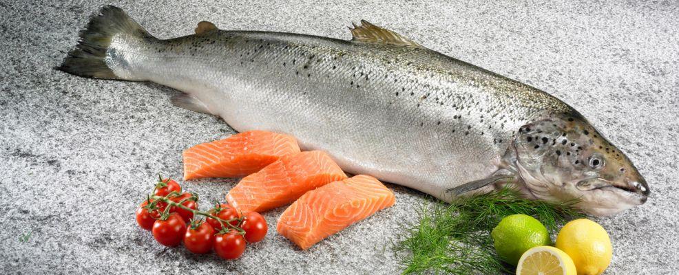 Salmone norvegese come cucinarlo e le sue propriet  SalePepe
