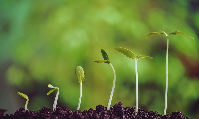 Come piantare i noccioli della frutta  SalePepe