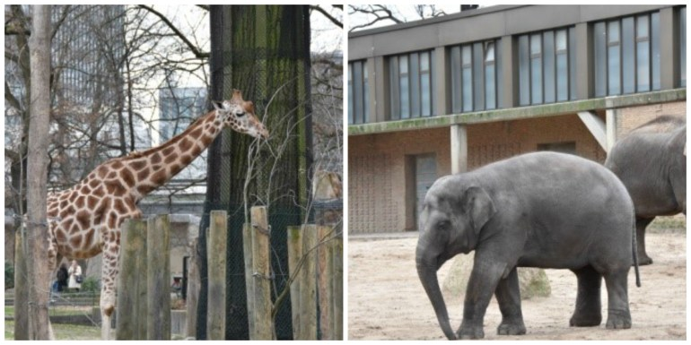 Giraffe and Elephant collage