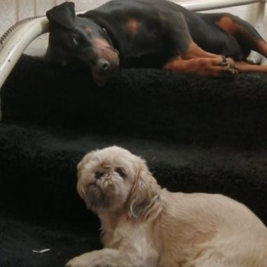 Dogs sat on the stairs , happy with no fireworks around. Image credit: Beckie Bold