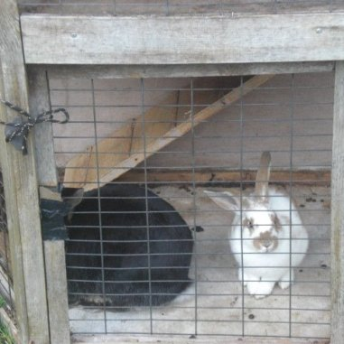 Rabbits in a hut together. Image credit: Beckie Bold
