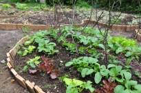 first seedlings growing