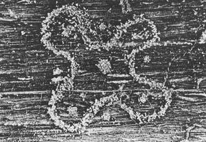 I Graffiti dei Camuni un simbolo di Lombardia