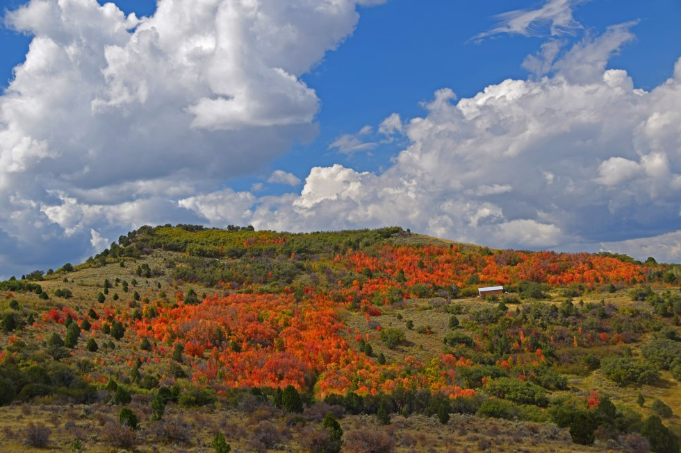 Fall Leaves in Salina Canyon