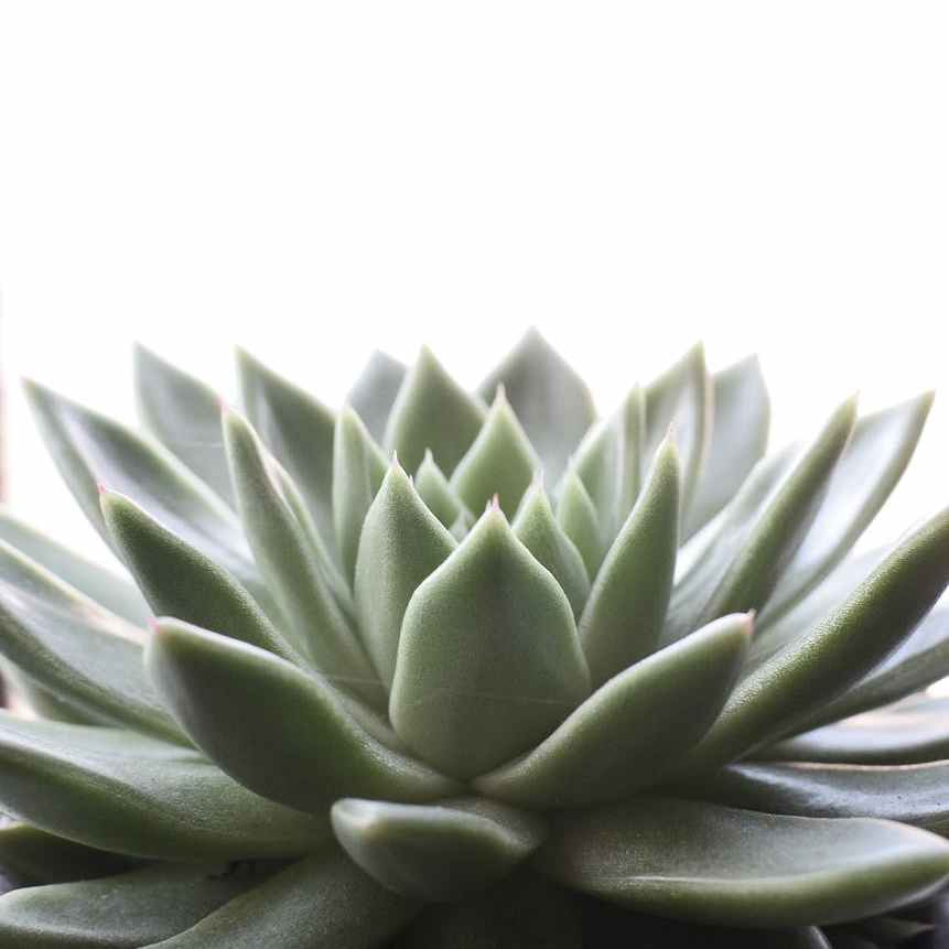 fresh succulent plant growing in pot