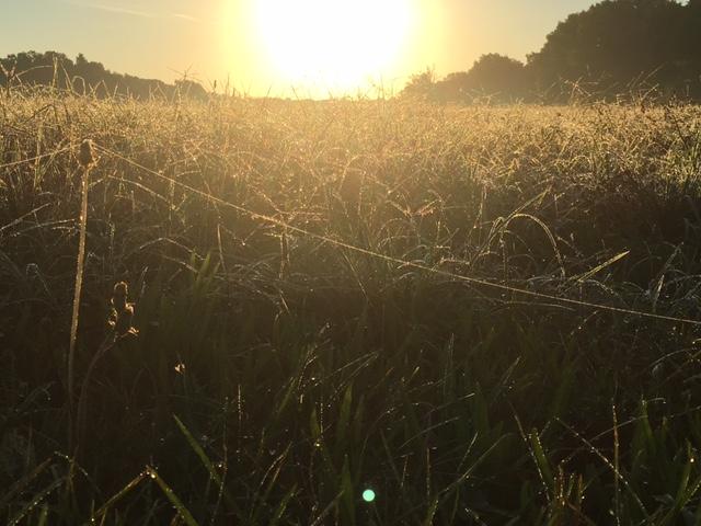 morning cobweb summer 2016