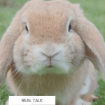 What does cruelty-free mean? And what is that bunny symbol for?