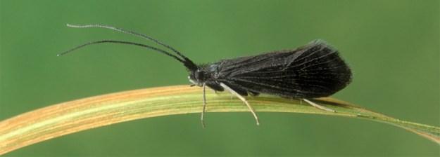 contactusfly