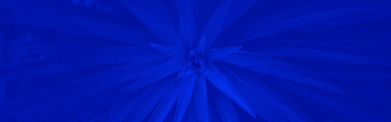 Kokoomus Kukka