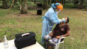 El coronavirus amenaza a los secoya y a los huaorani en la Amazonía (5-13-20)