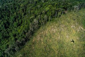Deforestation in Para