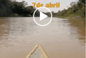 Mensaje Kichwa, 7 de abril, 2020 Desde la Comunidad Copal Urco, en el río Napo, a dos días y medio de viaje desde Iquitos-Loreto, nos habla Heysen Alex Palla (4-7-20)