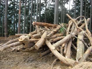 ドガガガガと地面に転がされる雑木たち