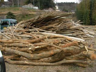 見てください、このすごい量の雑木!