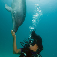 Diver contact dolphin