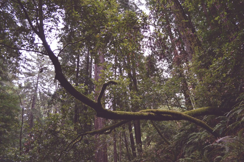 redwoods branch
