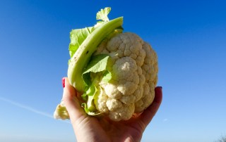 cornish cauliflower recipes