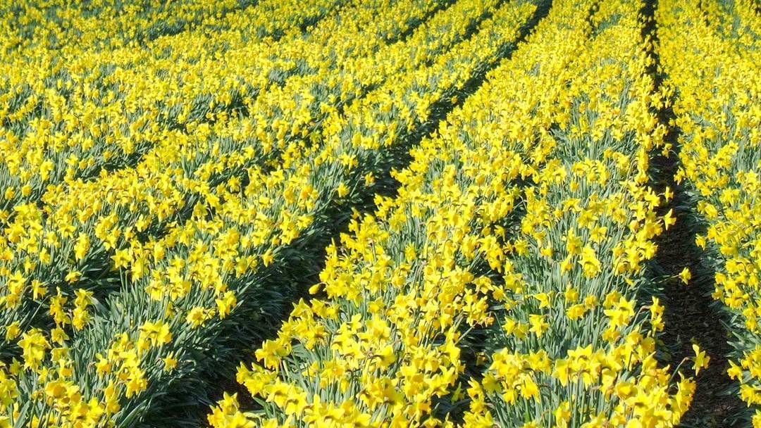 spring cornwall