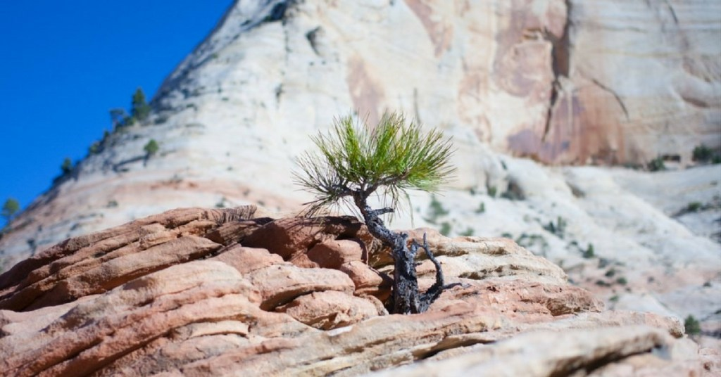 5 Best Beginner Photography Locations in Zion National Park