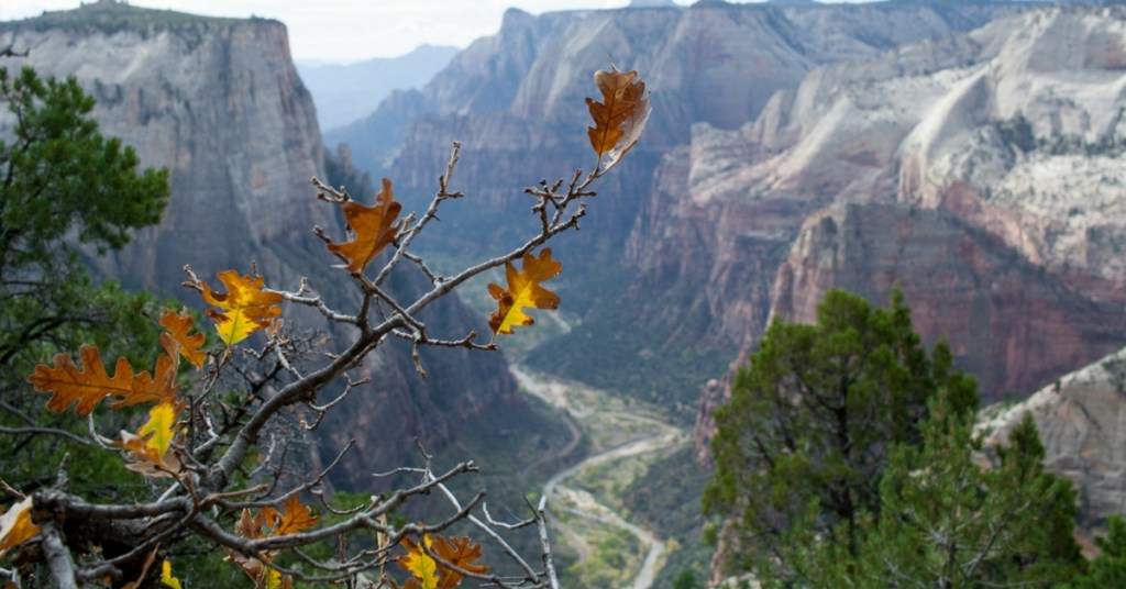 Zion National Park: Fall Adventures + Secret Waterfall