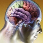 El lado derecho del cerebro