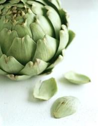 Alcachofa para adelgazar: propiedades diuréticas y usos