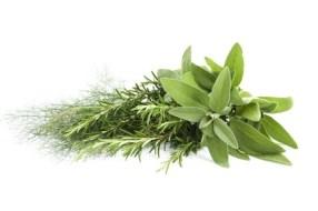 Aceite de Orégano: remedio contra Hongos, Infecciones y mucho más