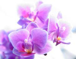 Flores de Bach para las Alergias: Beech