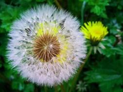 Combatir las Estrías: 6 Remedios Caseros naturales que reducen estrías
