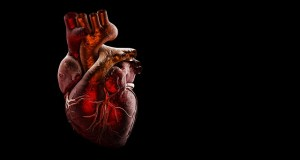 Los corazones de donantes que consumieron drogas ilegales o tuvieron sobredosis son seguros para trasplantes