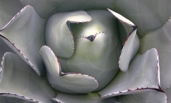 Calorias cucharada sirope de agave
