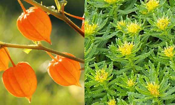 Parece magia… ¡pero son plantas adaptógenas!