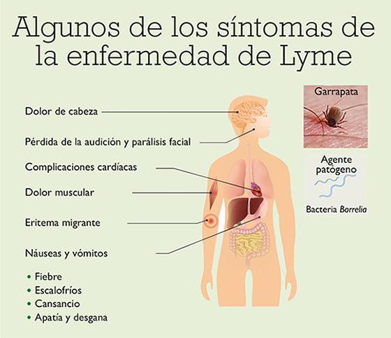 Enfermedad de lyme sintomas en humanos