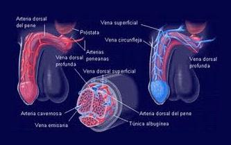 equitación y prostatitis