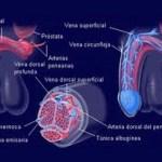 Causas de la Disfunción Eréctil y Sus Tratamientos