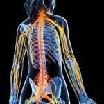 Ciática: Todo lo que Debes Saber Sobre el Dolor del Nervio Ciático