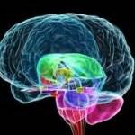 Psiconeuroinmunología (PNI), el Poder de la Mente
