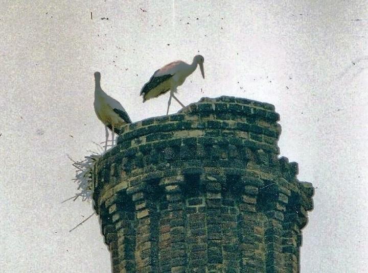 Domenica, con un ornitologo della Lipu, visita alle cicogne del Brianco