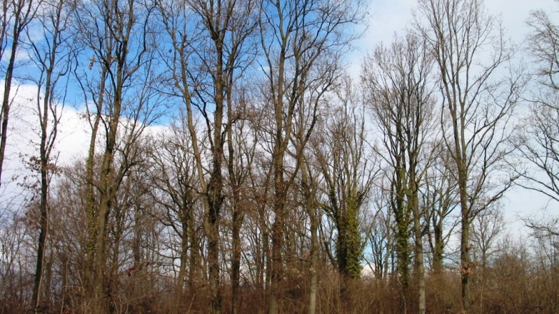 La ditta Forno Piergiorgio si è aggiudicata il taglio degli alberi in zona Pozzo della Mandria