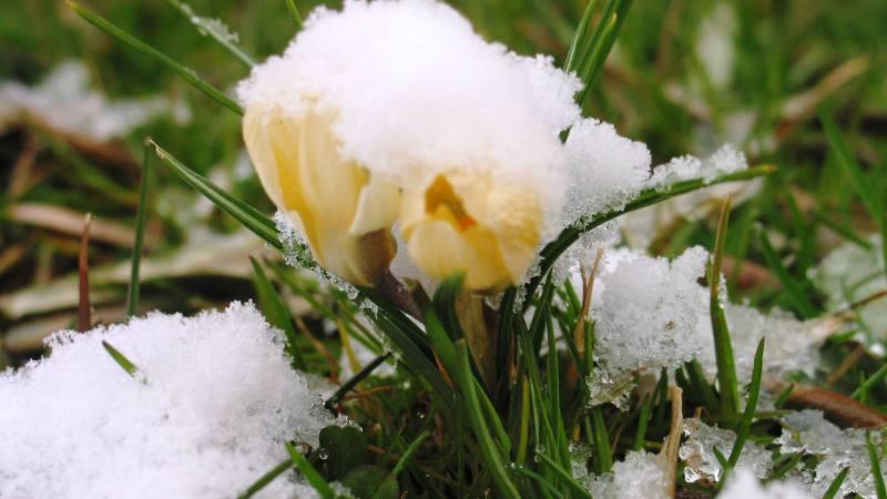 Accadeva 10 anni fa: La neve del 7 marzo