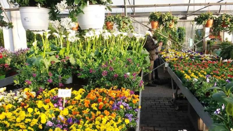 Virus covid-19: Da oggi riparte la vendita al dettaglio di piante e fiori